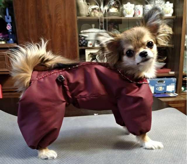 Продам Шью одежду для собак