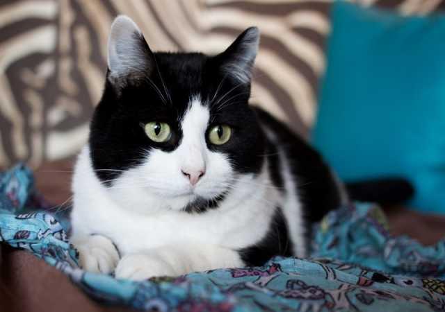 Отдам даром Яркий кот Марсель ищет дом