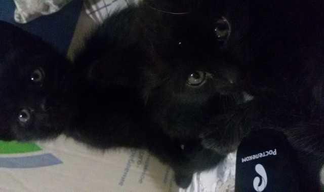 Продам: Котята