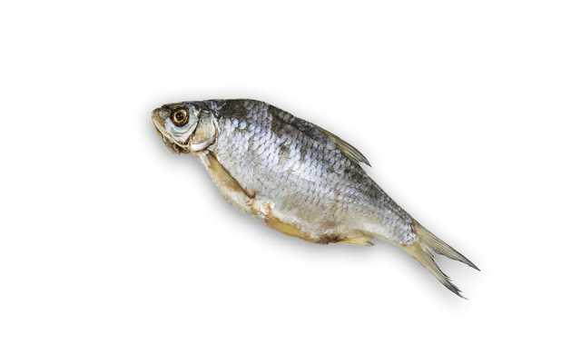 Продам Рыба вяленая тарань (крупная)
