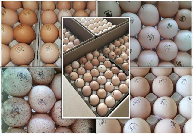 Продам: Инкубационное яйцо