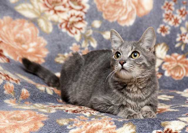 Отдам даром Домовенок Тишенька, котенок в дар.
