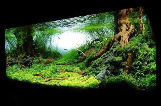 Предложение: Комплексное обслуживание аквариумов.