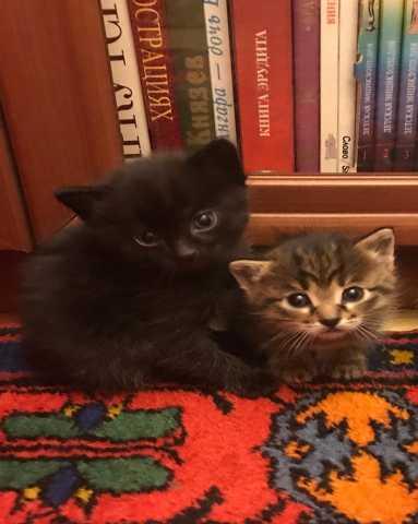 Отдам даром Кому котят-малышей На выбор, бесплатно