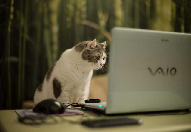 Вакансия: Помощник по интернету