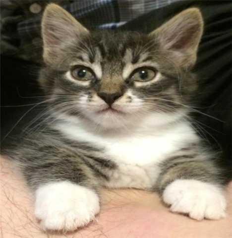 Отдам даром Девочка-котенок ищет хозяина!