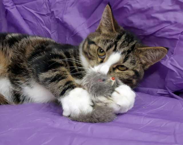 Отдам даром Очень общительный 4-хмесячный котёнок