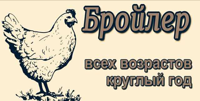 Продам Цыплёнок бройлера КРУГЛЫЙ ГОД!!!!