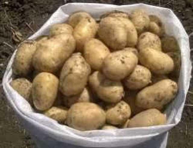 Продам Картофель деревенский.