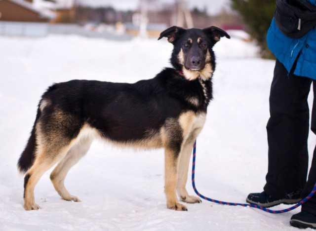 Отдам даром Чудесная собака Лада в добрые руки.