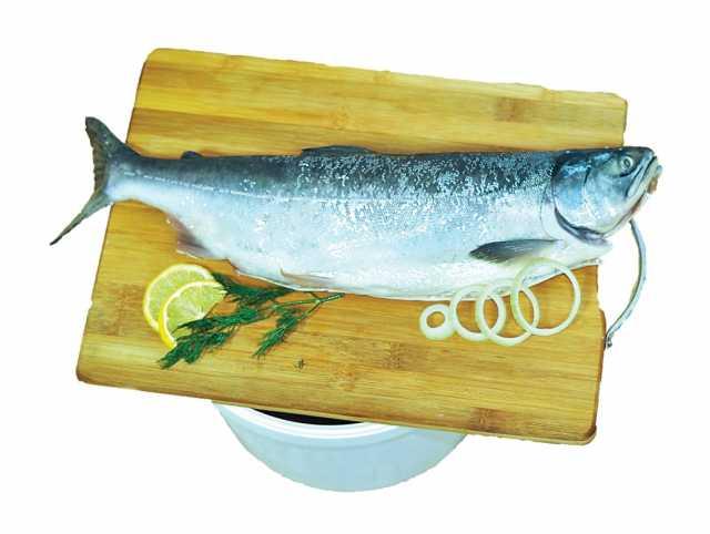 Продам Рыба малосольная и пряного посола