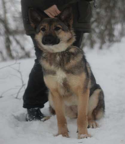 Отдам даром Красивейшая молодая собака