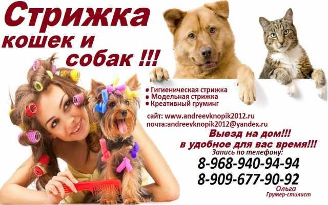 Предложение: Груминг животных,Стрижка кошек и собак