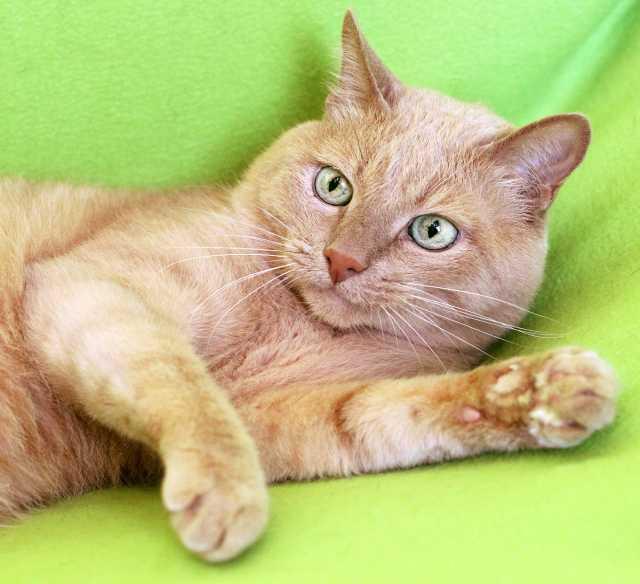 Отдам даром Мурзик, кот 10 лет, оставшийся без хозяй