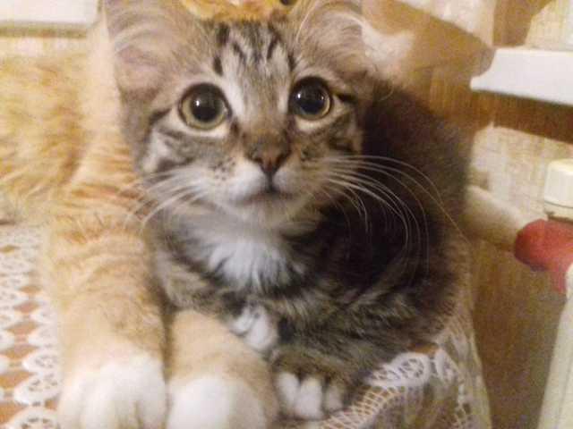 Отдам даром Маленький котенок ищет новый дом