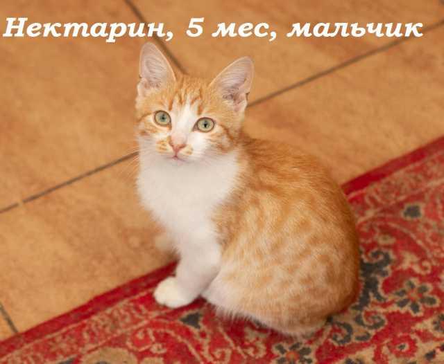 Отдам даром потрясающие котята