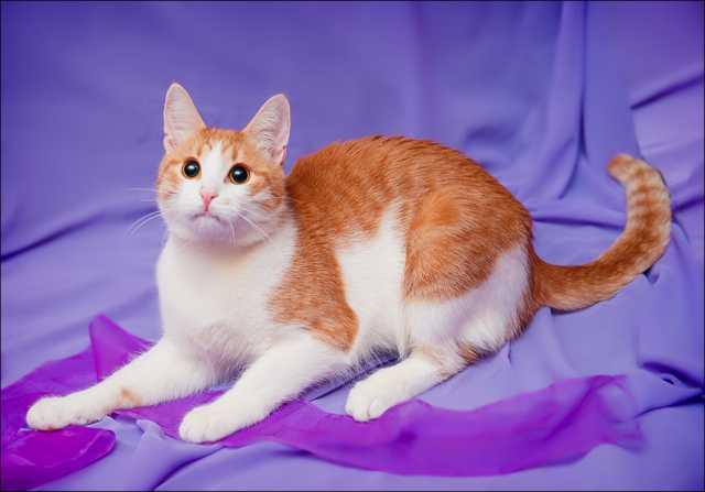Отдам даром Красавчик Федя, котенок-подросток в дар.