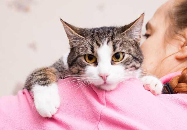 Отдам даром Кеша -шикарный кот 11 месяцев
