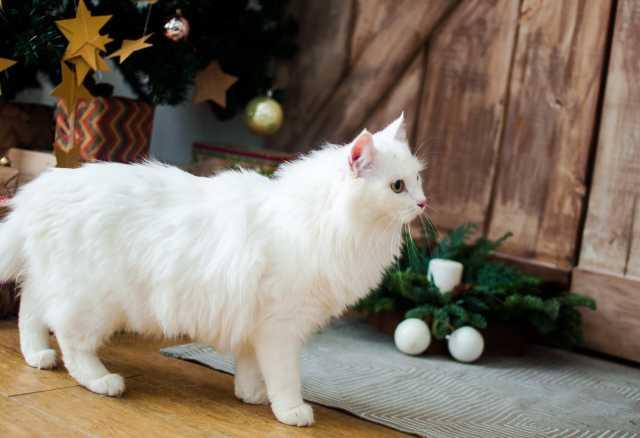 Отдам даром Кошечка Стелла- ласковая, но строгая