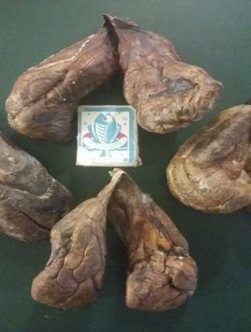 Продам бобровая струя