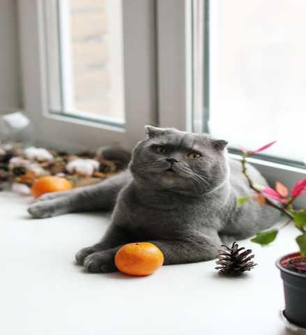 Отдам даром Человеколюбивый котик Сёма ищет дом.