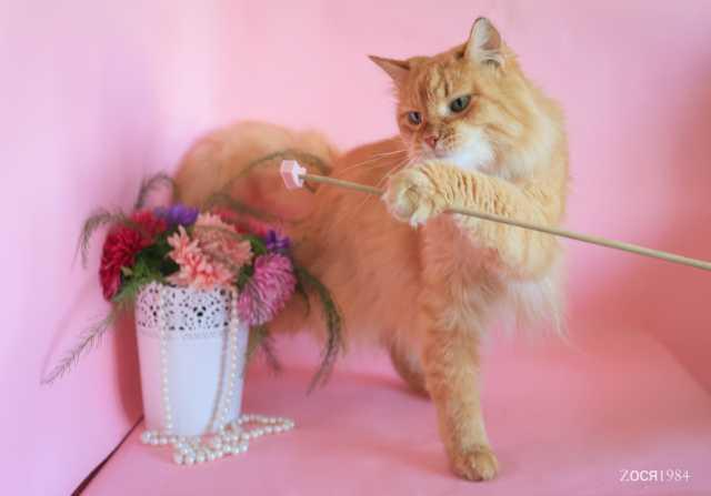 Отдам даром Рыжик хочет на ручки! Ласковый котик в д