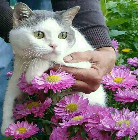 Отдам даром Кошка Мурка -спокойная, взрослая дама