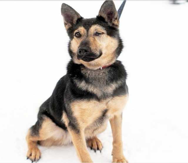 Отдам даром Собака Рори ищет семью.