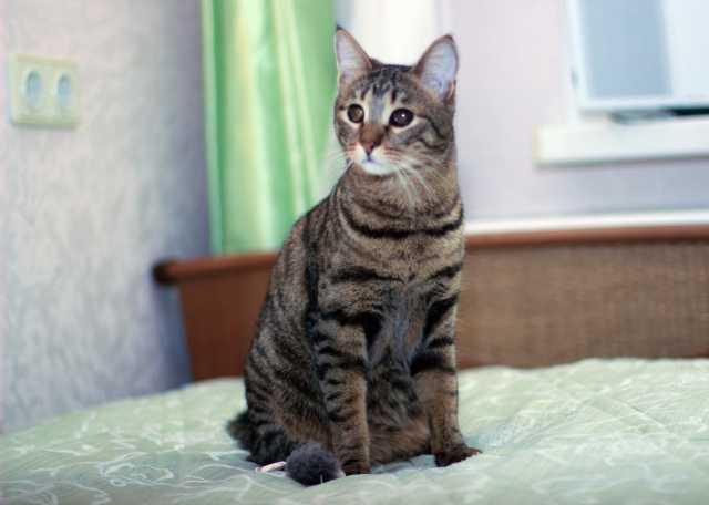 Отдам даром Полосатый котик-подросток Стивен