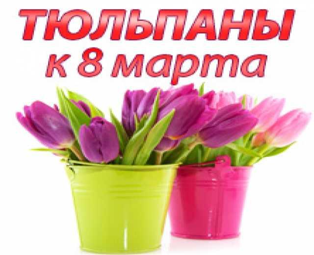 Продам Продам тюльпаны оптом к 8 марта