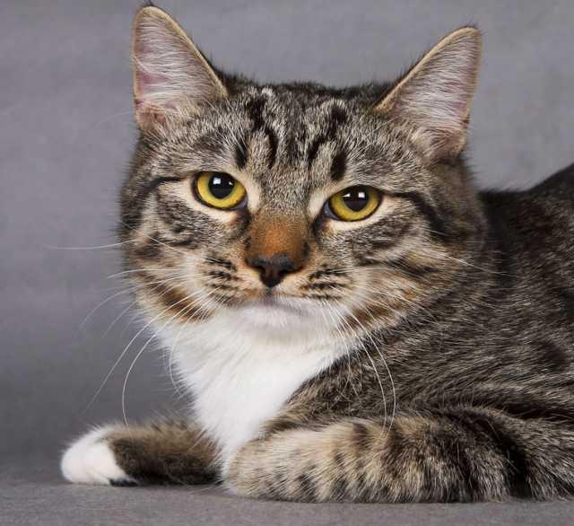 Отдам даром В добрые руки кот Котя!