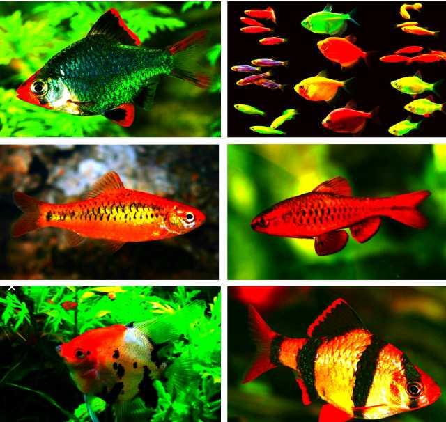 Продам Рыбки разные аквариумные  на любой вкус