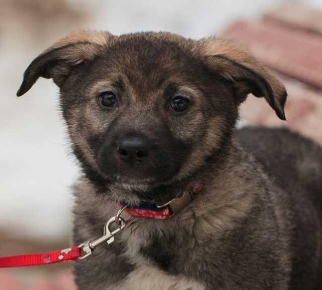 Отдам даром Активная щенок Касюша в добрые руки