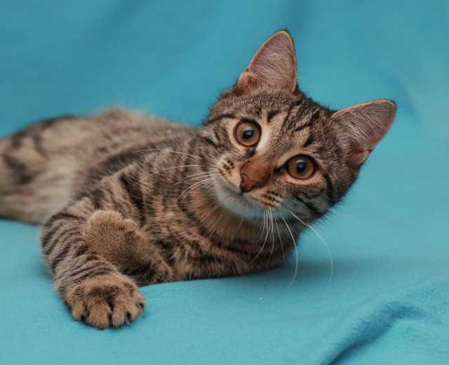 Отдам даром Котёнок Тиша в поисках дома и тепла.