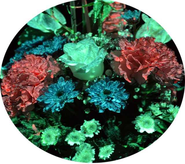 Продам Светящиеся живые цветы