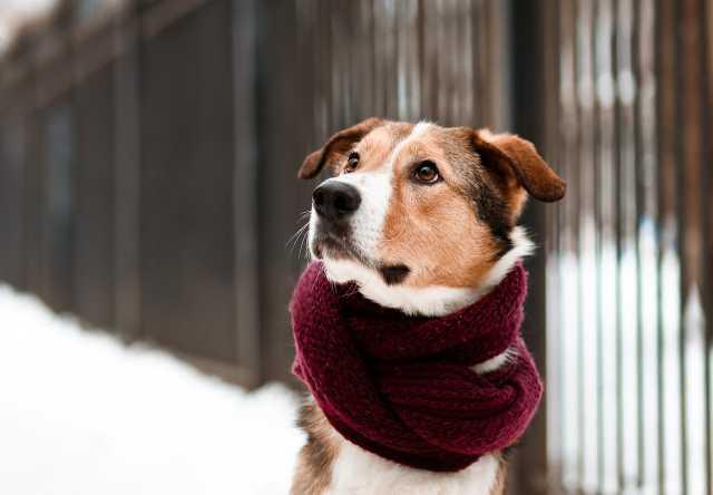 Отдам даром Джим - добропорядочный пёс ищет семью