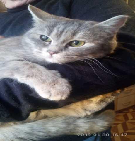 Продам Пристрой котят