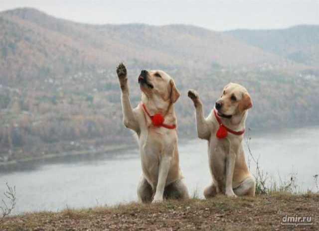 Предложение: Дрессировка собак. кинолог