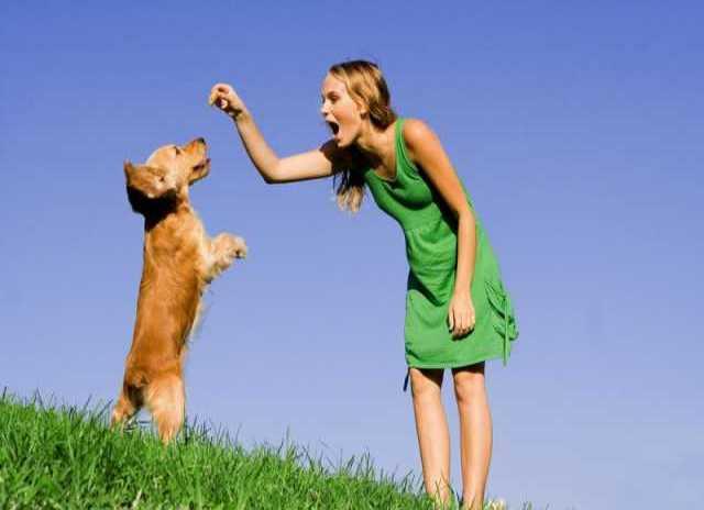 Предложение: Дрессировка собак. услуги кинолога