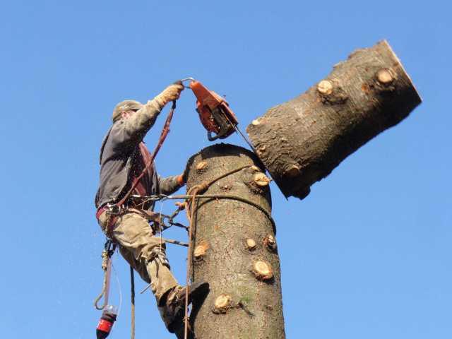 Предложение: Спил Опил Обрезка Валка деревьев, веток