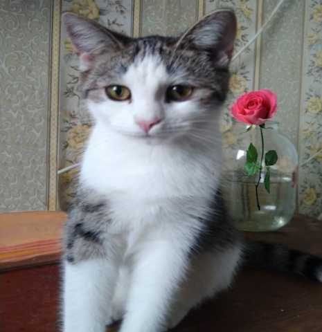 Отдам даром Сонечка милый и добрый котенок