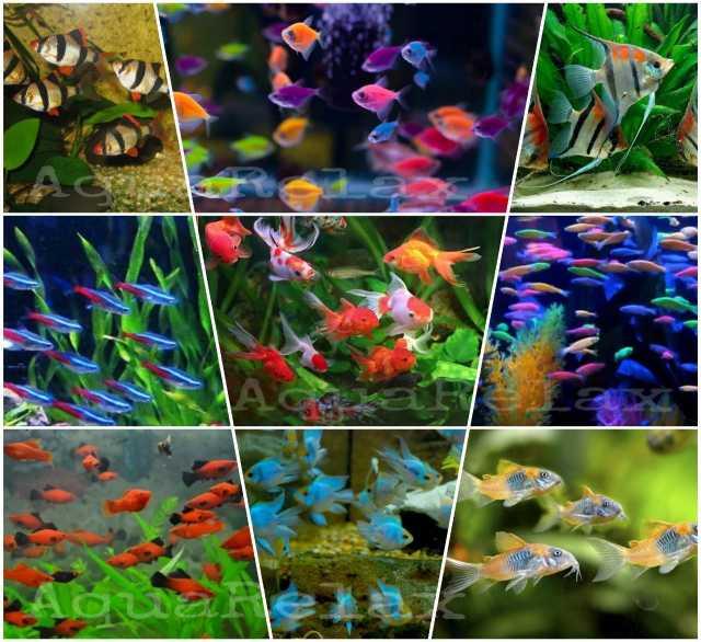 Продам Разные рыбки. Большой выбор. Отправим