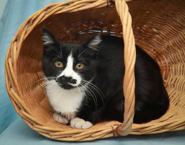 Продам Застенчивый котик ищет дом!