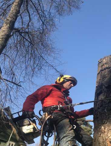 Предложение: Удаление деревьев в Раменском районе