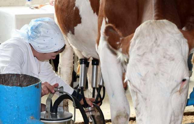 Вакансия: Доярка и Рабочий по уходу за животными