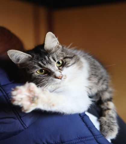 Отдам даром Кошка Грейси
