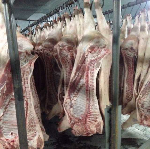 Продам Свинина охлажденная в полутушах