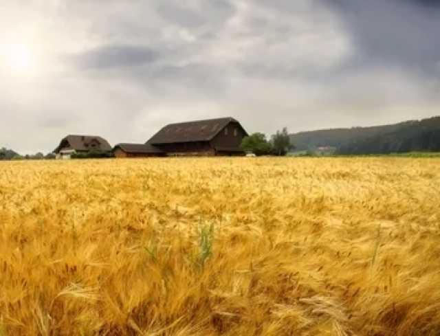Продам: 8000 га сельхозназначения в Тамбовской о