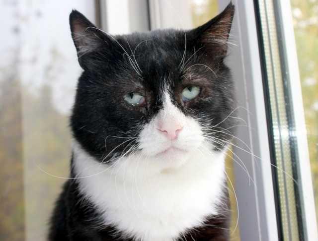 Отдам даром Самый грустный кот на свете ищет дом!