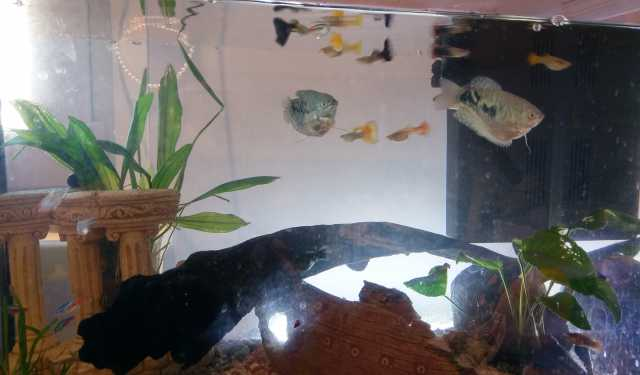 Продам Аквариум JUWEL с рыбками и растениями +